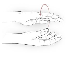 Wrist supination and pronation