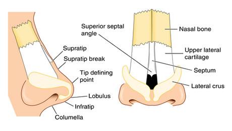 Nasal Airway Surgery