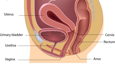 Urinary Incontinence Surgery